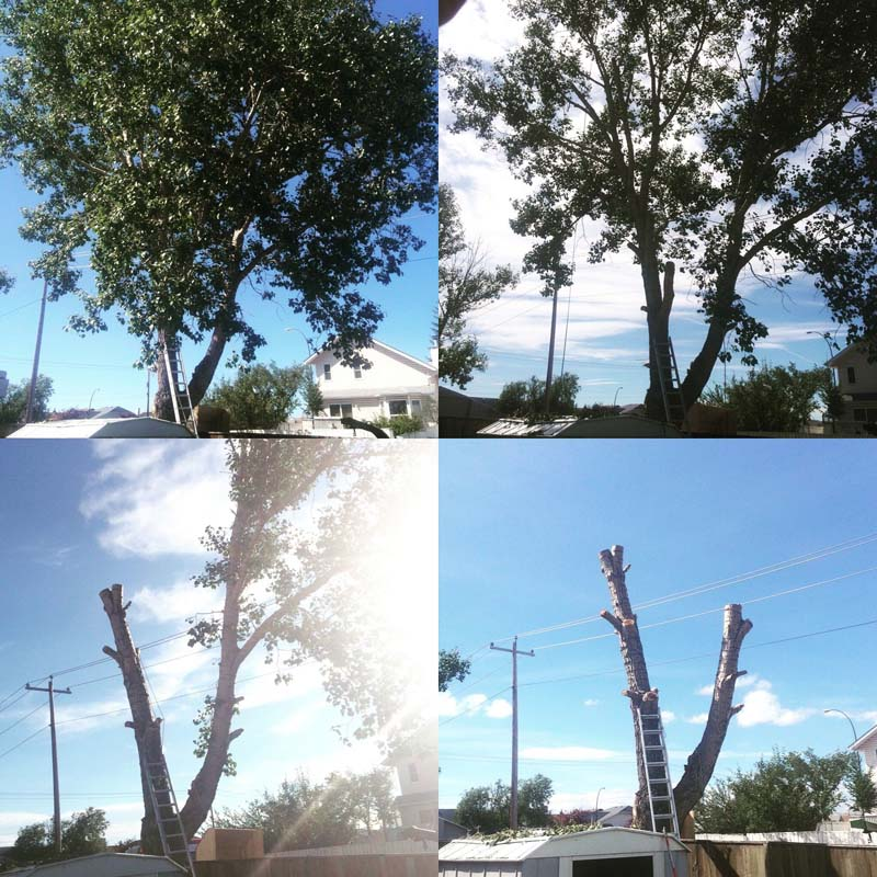 Tree-Removal12
