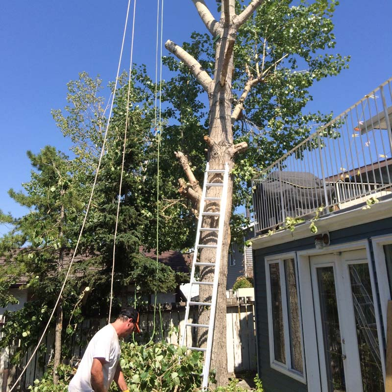 Tree-Removal3