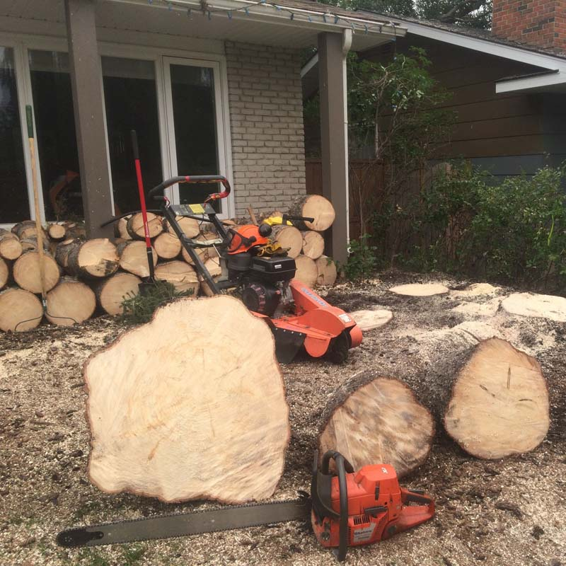 Tree-Removal6