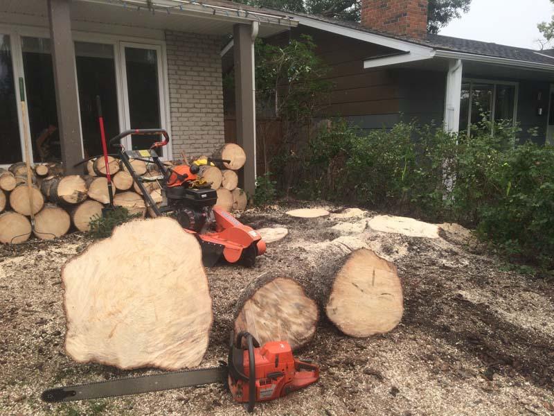 stump-grinding7