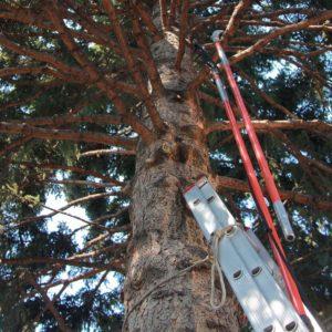 tree-limb2