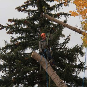 tree-limb3