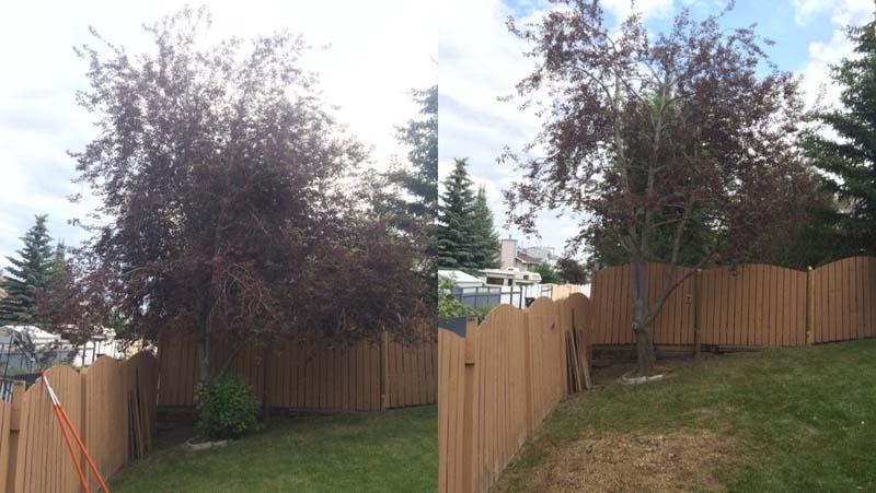 tree-pruning1