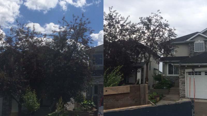 tree-pruning2