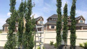 tree-pruning4