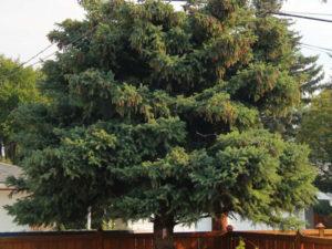 tree-shaping-thumb
