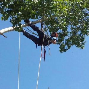 tree-limb1