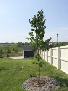 New tree installations
