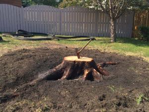 stump-grinding4
