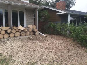 stump-grinding8